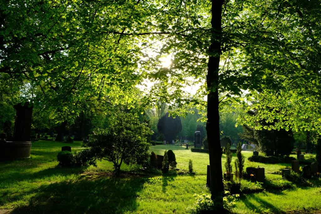 Top 7 Surprising Reasons Why You Should Choose a Green Funeral